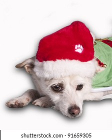 chihuahua in christmas costume