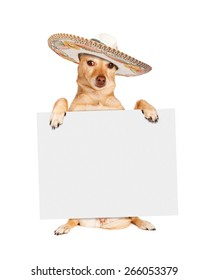 Chihuahua crossbreed dog sitting up and holding a blank white sign while wearing a Mexican sombrero hat