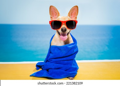 chihuahua dog at the beach having a wellness spa treatment wearing red funny sunglasses