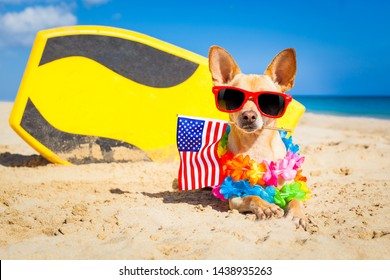 chihuahua dog  at the beach with a surfboard wearing sunglasses and flower chain on summer vacation holidays  at the beach and usa independence day flag for the 4th of July
