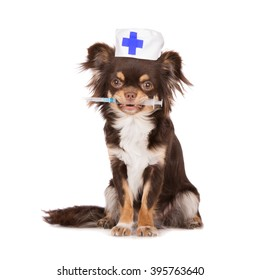 chihuahua dog in a doctor's hat holding syringe