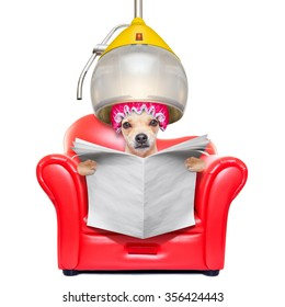 chihuahua dog at the hairdresser, under the drying hood,reading a blank newspaper, isolated on white background