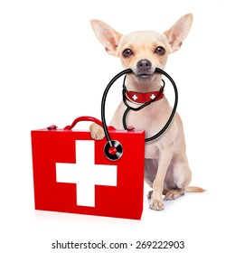 chihuahua dog as a medical veterinary doctor with stethoscope and first aid kit ,isolated on white background