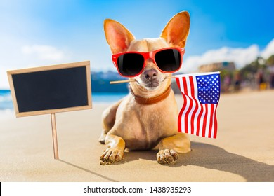 chihuahua dog at the ocean shore beach wearing red funny sunglasses and usa independence day flag for the 4th of July