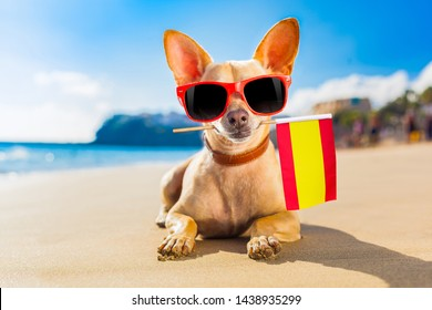 chihuahua dog at the ocean shore beach wearing red funny sunglasses and spanish flag from spain in mouth