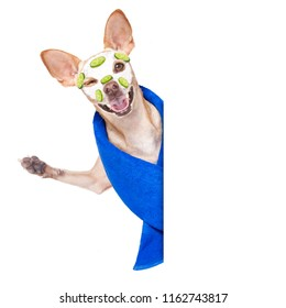 chihuahua  dog relaxing  with beauty mask in  spa wellness center , moisturizing cream mask and cucumber, wearing a fancy bathrobe behind a banner placard