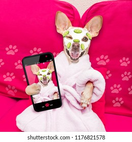 chihuahua  dog relaxing  with beauty mask in  spa wellness center , moisturizing cream mask and cucumber, wearing a fancy bathrobe taking a selfie with smartphone