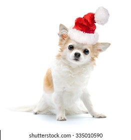 49b90e7160467 Chihuahua dog with Santa hat on white background