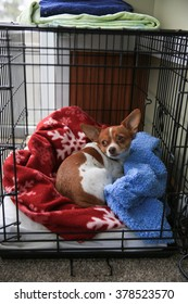 A chihuahua dog sleeping in her crate