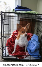 A chihuahua dog standing looking out of her crate