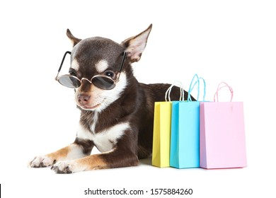 Chihuahua dog in sunglasses with paper shopping bags isolated on white background
