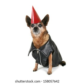 a chihuahua dressed up as a biker and a party hat on