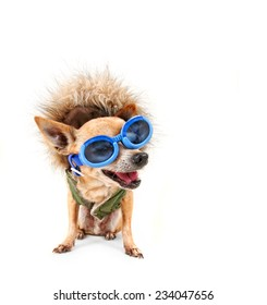 a chihuahua with a furry coat and goggles