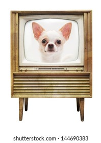 Chihuahua on television isolated on white background