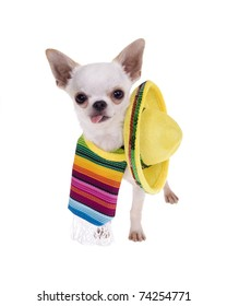 Chihuahua puppy dog wearing a colorful mexican serape blanket with a bright yellow sombrero ready for a fiesta!