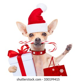 chihuahua santa claus   dog  ready for christmas sale  , isolated on white background