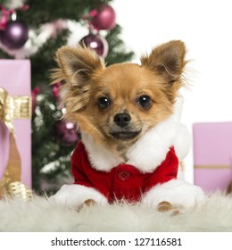 Chihuahua wearing a Christmas suit in front of Christmas decorations against white background