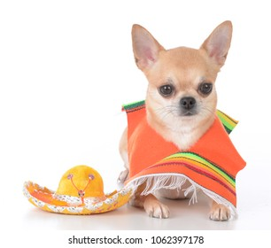 chihuahua wearing mexican poncho and sombrero on white background background