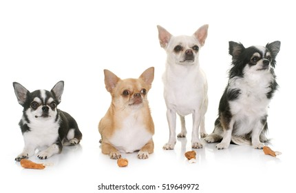 chihuahuas and treats in front of white background