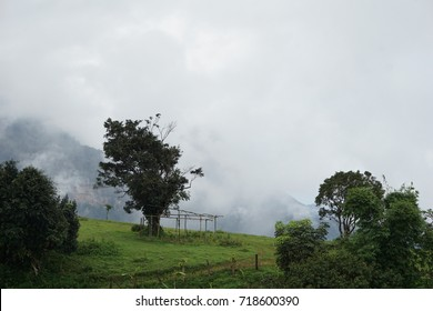 Chikmagalur is a hill station in Karnataka, a mountain range in the Western Ghats. Trails through forests and grasslands, tea and coffee estates lead up to Mullayanagiri Peak.