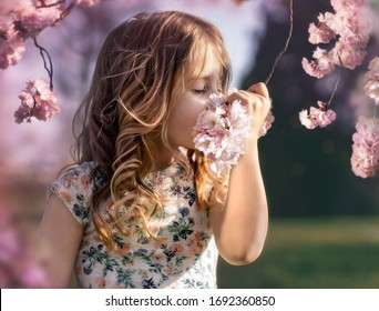 Child, 6 year old girl, smelling a branch of a cherry blossom tree in a park in the Netherlands in spring time. Don't forget to stop and smell the flowers!