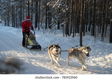a child with an adult and ride on a dog sled in the winter forest at Sunny day