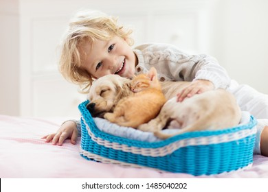 Child with baby dog and cat. Kids play with puppy and kitten in a basket. Little boy and American cocker spaniel on bed at home. Pets at home. Animal care.