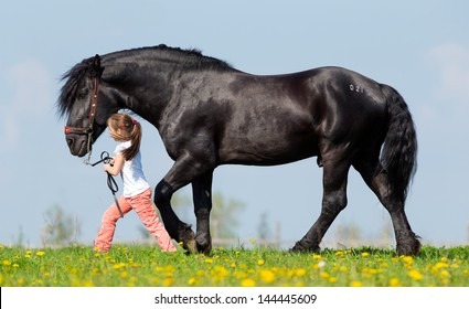Child and big black horse in pasture in spring.