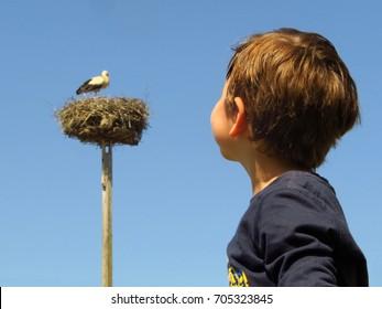 child birdwatching white stork nest, children bird watching, boy watching birds