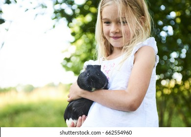 Child blond girl holding her guinea pig pet animal outdoors in the garden. Focused to Guinea Pig