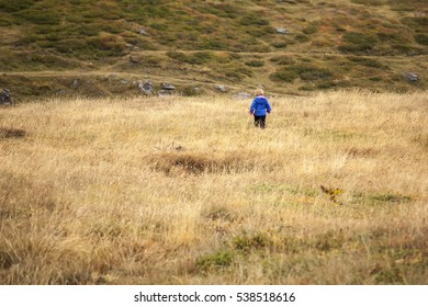 Child with blue jacket strolling threw open field in autumn.