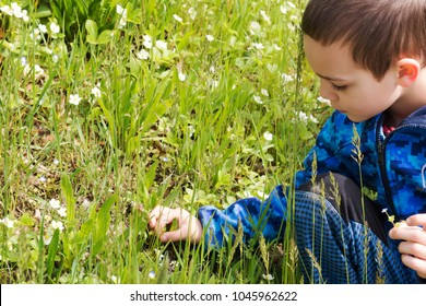 Child boy exploring wild flower and herbs on a spring meadow