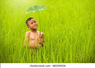 Child boy farmer smiling in rain central rice