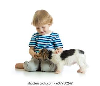 Child boy feeds dog puppy isolated on white background.