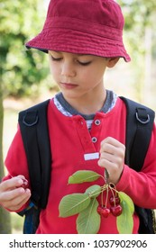 Child boy holding branch with cherries, eating a fresh cherry fruit in the garden.