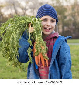 Child boy holding a bunch of carrots in garden allotment