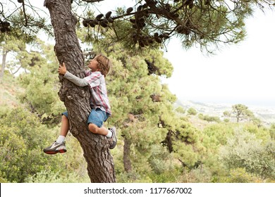 Child boy in pine tree forest climbing up tree trunk in countryside, exploring discovery fun, growing up outdoors. Kids games, leisure recreation lifestyle. Summer holiday adventure. Achievement.