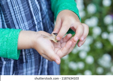 Child boy showing a snail in his palm. Kid with snail. Selective focus.