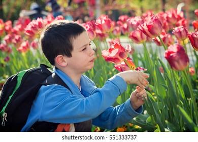 Child boy smelling a tulip flower in the spring park