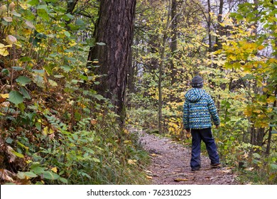 Child boy walking through an autumn or fall forest, back view