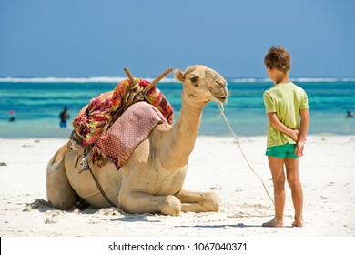 child and camel on the beach looking at each other