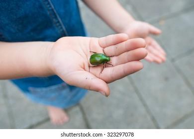 Child caught Beetle