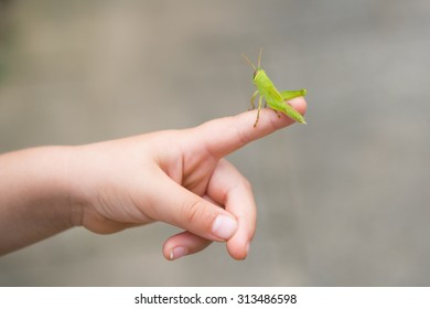Child caught grasshoppers