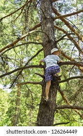 A child climbed on a pine-tree in-field, to find necessary direction of motion.