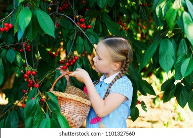 The child collects cherries . A pretty girl picking cherries