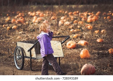 Child contemplating the best pumpkin to pick out the hundreds in front of her