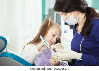 Child at dentist office brushes artificial human jaw