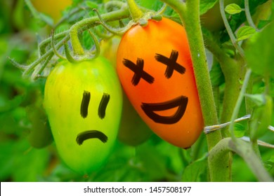 child developmental delay concept. bad autumn harvest concept. ripe red tomato is laughing at green unripe tomato in the garden bed outdoors in the garden.