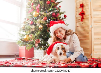 Child with dog near christmas tree. Happy Christmas and New Year