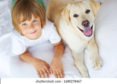 A child with a dog plays fun at home. A little boy with a labrador smiles and laughs.
